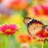 beautiful butterfly landing on radiant flower, reflecting interdependence with climate change